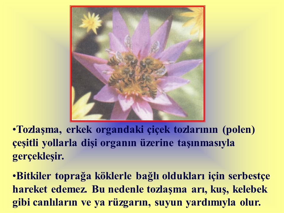 Tozlaşma, erkek organdaki çiçek tozlarının (polen) çeşitli yollarla dişi organın üzerine taşınmasıyla gerçekleşir. Bitkiler toprağa köklerle bağlı old