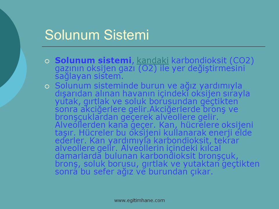 Solunum Sistemi  Solunum sistemi, kandaki karbondioksit (CO2) gazının oksijen gazı (O2) ile yer değiştirmesini sağlayan sistem.kandaki  Solunum sist