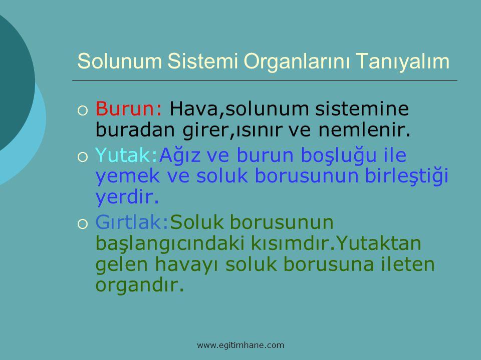 Solunum Sistemi Organlarını Tanıyalım  Soluk Borusu:Yutak ile akciğer arasında kalan 10-12cm uzunluğundaki borudur.