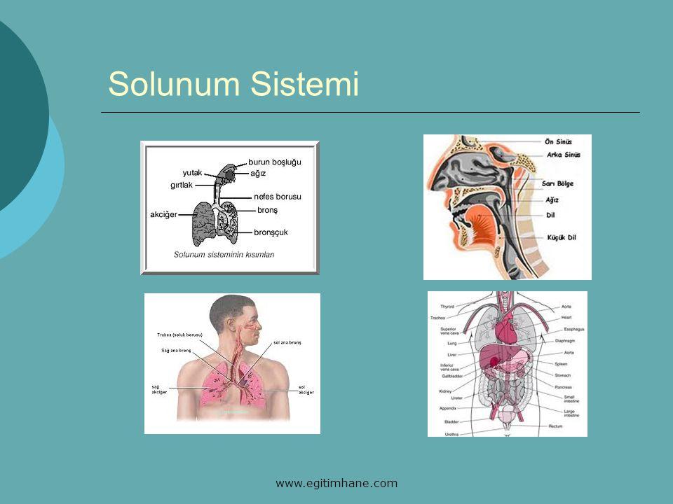 Solunum Sistemi www.egitimhane.com