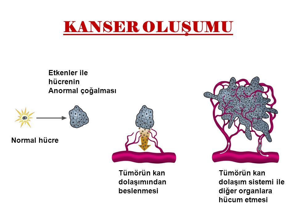 KANSER OLUŞUMU Etkenler ile hücrenin Anormal çoğalması Normal hücre Tümörün kan dolaşımından beslenmesi Tümörün kan dolaşım sistemi ile diğer organlara hücum etmesi