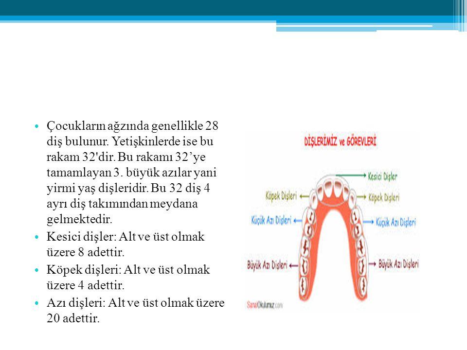 Çocukların ağzında genellikle 28 diş bulunur. Yetişkinlerde ise bu rakam 32'dir. Bu rakamı 32'ye tamamlayan 3. büyük azılar yani yirmi yaş dişleridir.