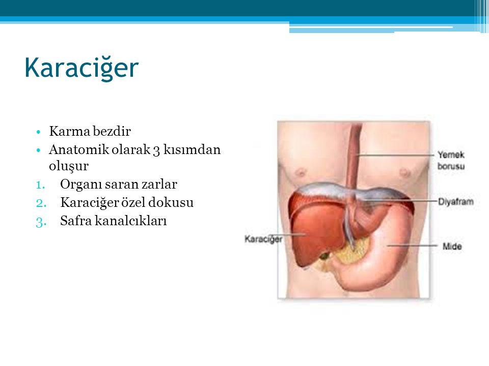 Karaciğer Karma bezdir Anatomik olarak 3 kısımdan oluşur 1.Organı saran zarlar 2.Karaciğer özel dokusu 3.Safra kanalcıkları