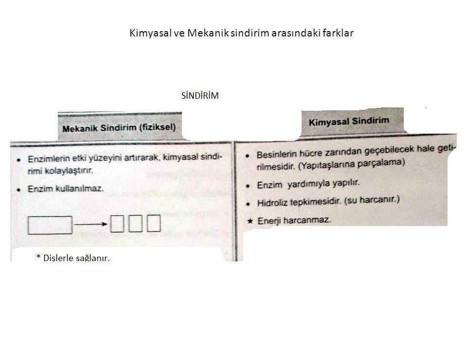 Kimyasal ve Mekanik sindirim arasındaki farklar