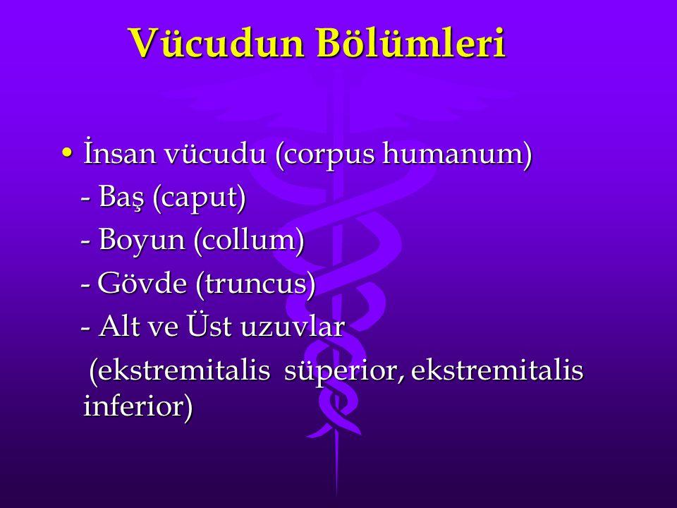 Vücudun Bölümleri İnsan vücudu (corpus humanum)İnsan vücudu (corpus humanum) - Baş (caput) - Baş (caput) - Boyun (collum) - Boyun (collum) - Gövde (truncus) - Gövde (truncus) - Alt ve Üst uzuvlar - Alt ve Üst uzuvlar (ekstremitalis süperior, ekstremitalis inferior) (ekstremitalis süperior, ekstremitalis inferior)