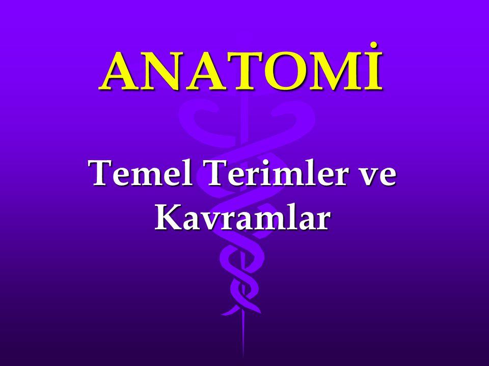 ANATOMİ İnsan vücudunun yapı ve fonksiyonlarınıİnsan vücudunun yapı ve fonksiyonlarını inceleyen bilim Anatomidir.
