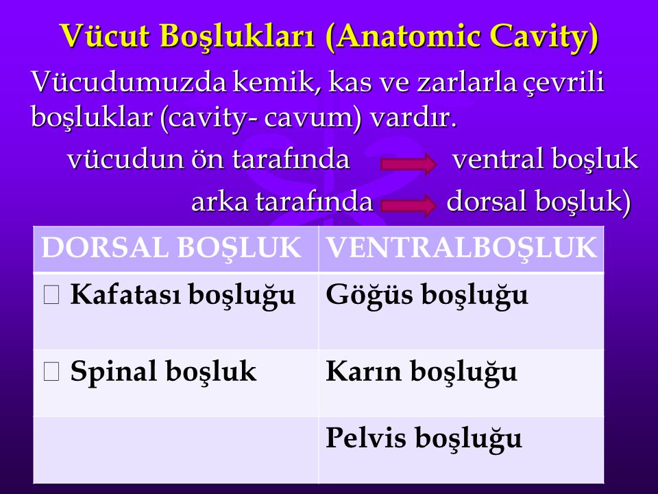 Vücut Boşlukları (Anatomic Cavity) Vücudumuzda kemik, kas ve zarlarla çevrili boşluklar (cavity- cavum) vardır. vücudun ön tarafında ventral boşluk vü
