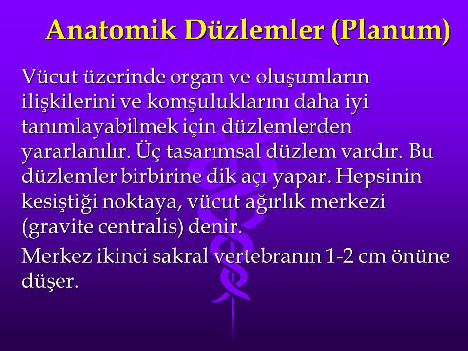 Anatomik Düzlemler (Planum) Vücut üzerinde organ ve oluşumların ilişkilerini ve komşuluklarını daha iyi tanımlayabilmek için düzlemlerden yararlanılır.