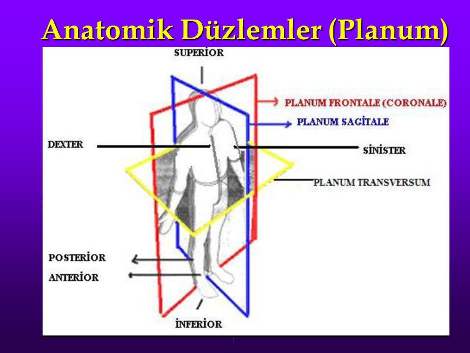 Anatomik Düzlemler (Planum)
