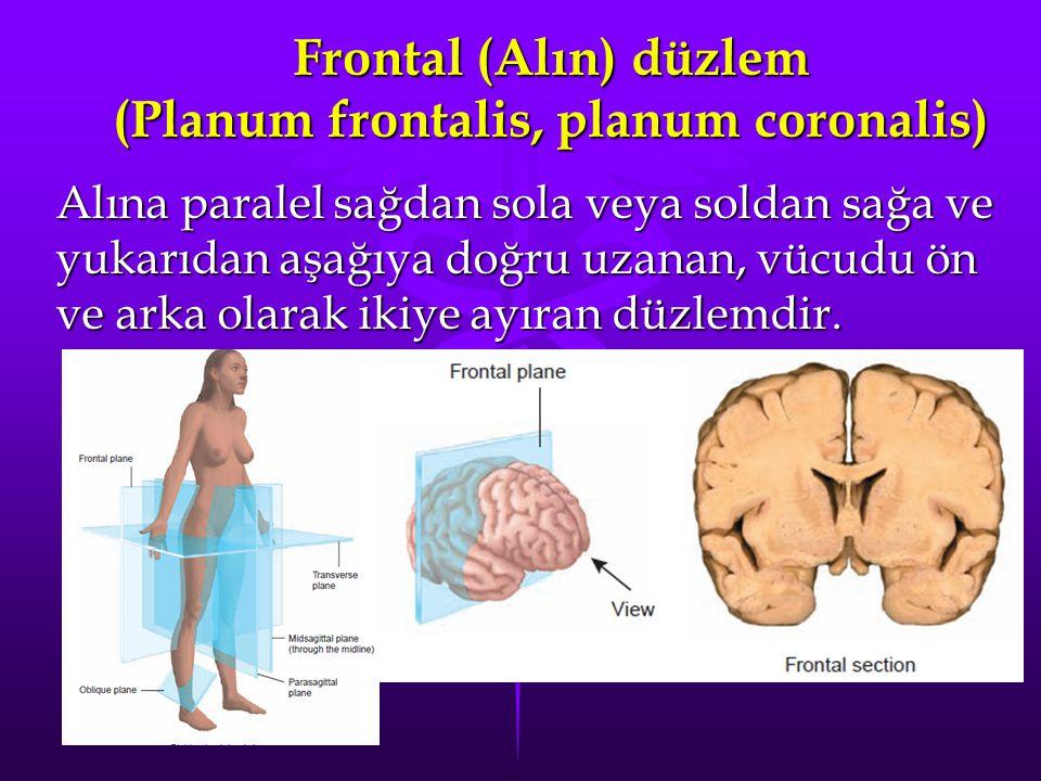 Frontal (Alın) düzlem (Planum frontalis, planum coronalis) Alına paralel sağdan sola veya soldan sağa ve yukarıdan aşağıya doğru uzanan, vücudu ön ve arka olarak ikiye ayıran düzlemdir.