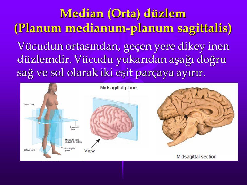 Median (Orta) düzlem (Planum medianum-planum sagittalis) Vücudun ortasından, geçen yere dikey inen düzlemdir. Vücudu yukarıdan aşağı doğru sağ ve sol