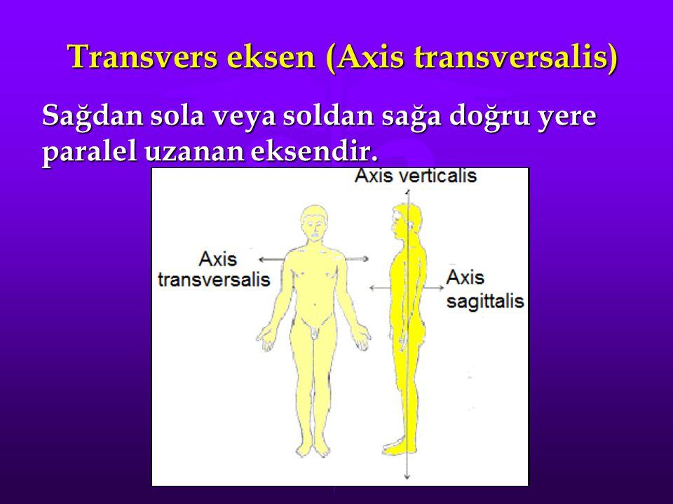 Transvers eksen (Axis transversalis) Sağdan sola veya soldan sağa doğru yere paralel uzanan eksendir.