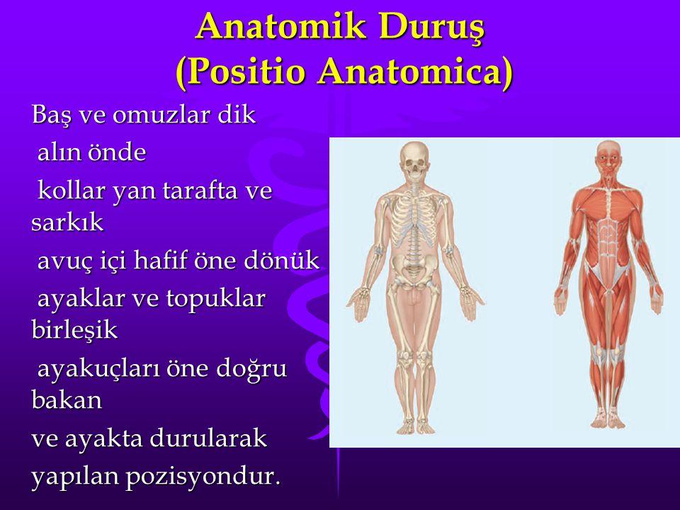 Anatomik Duruş (Positio Anatomica) Baş ve omuzlar dik alın önde alın önde kollar yan tarafta ve sarkık kollar yan tarafta ve sarkık avuç içi hafif öne dönük avuç içi hafif öne dönük ayaklar ve topuklar birleşik ayaklar ve topuklar birleşik ayakuçları öne doğru bakan ayakuçları öne doğru bakan ve ayakta durularak yapılan pozisyondur.
