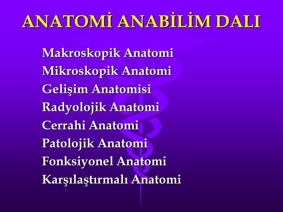 ANATOMİ ANABİLİM DALI Makroskopik Anatomi Mikroskopik Anatomi Gelişim Anatomisi Radyolojik Anatomi Cerrahi Anatomi Patolojik Anatomi Fonksiyonel Anatomi Karşılaştırmalı Anatomi