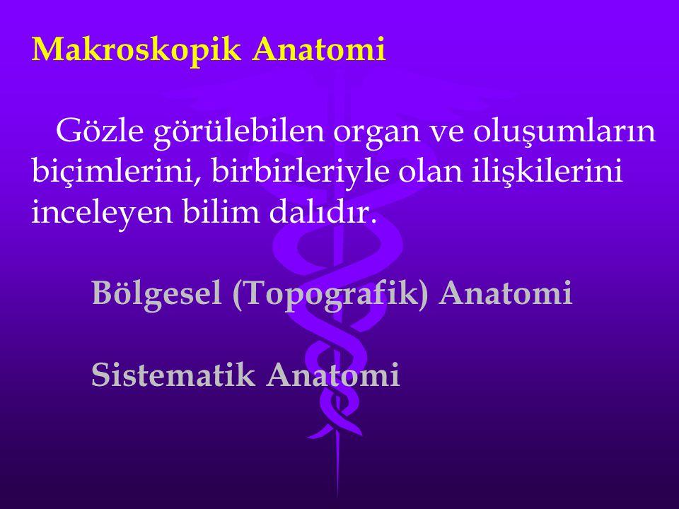 Makroskopik Anatomi Gözle görülebilen organ ve oluşumların biçimlerini, birbirleriyle olan ilişkilerini inceleyen bilim dalıdır. Bölgesel (Topografik)