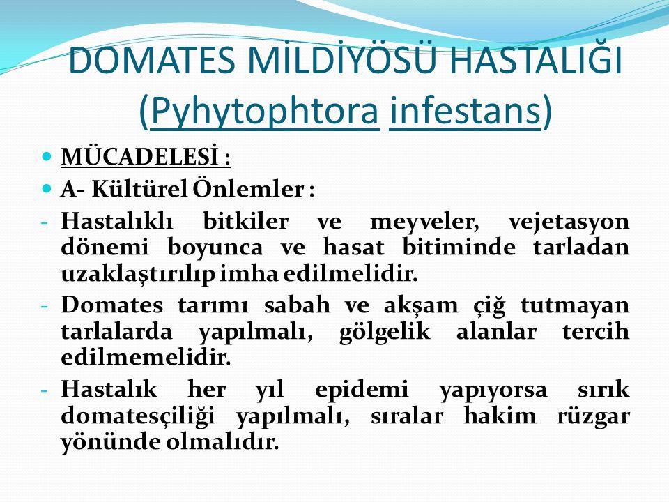 DOMATES MİLDİYÖSÜ HASTALIĞI (Pyhytophtora infestans) MÜCADELESİ : A- Kültürel Önlemler : - Hastalıklı bitkiler ve meyveler, vejetasyon dönemi boyunca