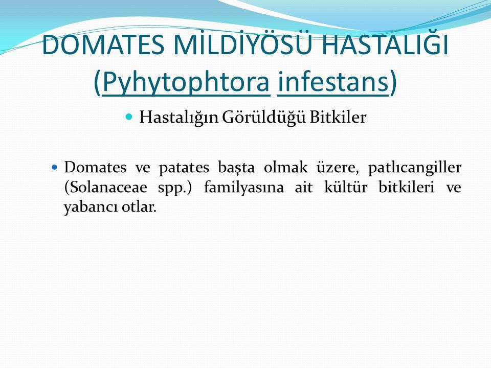 DOMATES MİLDİYÖSÜ HASTALIĞI (Pyhytophtora infestans) Hastalığın Görüldüğü Bitkiler Domates ve patates başta olmak üzere, patlıcangiller (Solanaceae sp