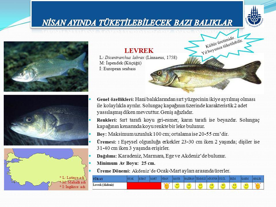 Genel özellikleri: Hani balıklarından sırt yüzgecinin ikiye ayrılmış olması ile kolaylıkla ayrılır. Solungaç kapağının üzerinde karakteristik 2 adet y