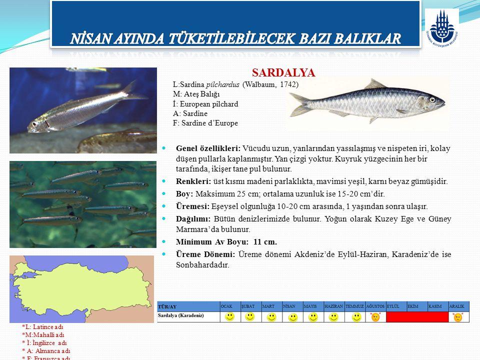 SARDALYA L:Sardina pilchardus (Walbaum, 1742) M: Ateş Balığı İ: European pilchard A: Sardine F: Sardine d'Europe Genel özellikleri: Vücudu uzun, yanla
