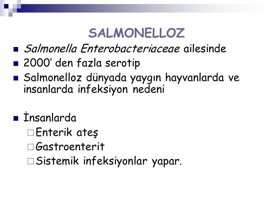 SALMONELLOZ Salmonella Enterobacteriaceae ailesinde 2000' den fazla serotip Salmonelloz dünyada yaygın hayvanlarda ve insanlarda infeksiyon nedeni İnsanlarda  Enterik ateş  Gastroenterit  Sistemik infeksiyonlar yapar.