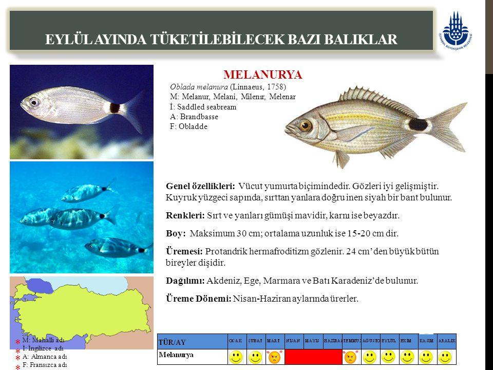 MELANURYA Oblada melanura (Linnaeus, 1758) M: Melanur, Melani, Milenır, Melenar İ: Saddled seabream A: Brandbasse F: Obladde EYLÜL AYINDA TÜKETİLEBİLECEK BAZI BALIKLAR Genel özellikleri: Vücut yumurta biçimindedir.