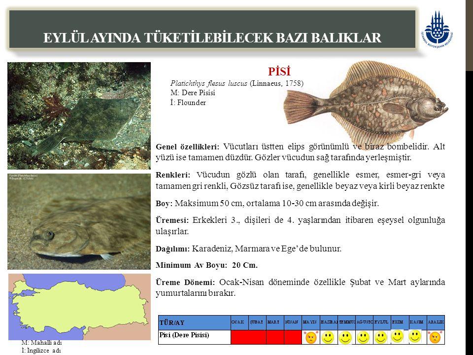 PİSİ Platichthys flesus luscus (Linnaeus, 1758) M: Dere Pisisi İ: Flounder EYLÜL AYINDA TÜKETİLEBİLECEK BAZI BALIKLAR Genel özellikleri: Vücutları üst