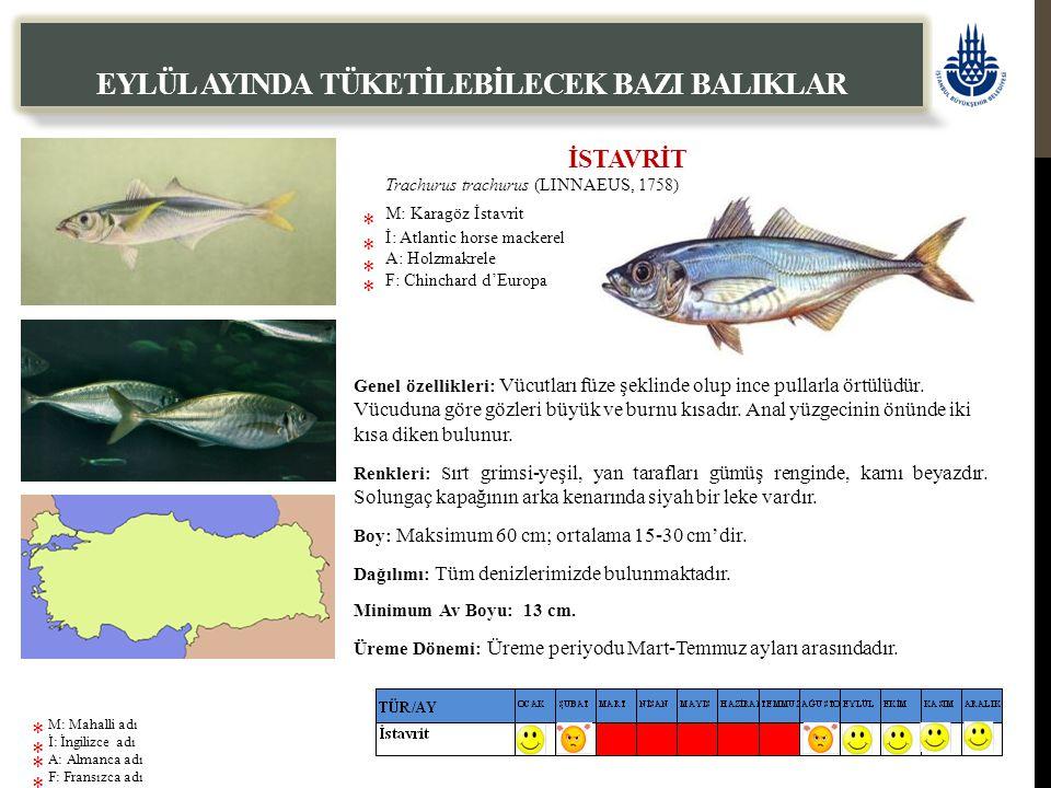 İSTAVRİT Trachurus trachurus (LINNAEUS, 1758) M: Karagöz İstavrit İ: Atlantic horse mackerel A: Holzmakrele F: Chinchard d'Europa EYLÜL AYINDA TÜKETİLEBİLECEK BAZI BALIKLAR Genel özellikleri: Vücutları füze şeklinde olup ince pullarla örtülüdür.