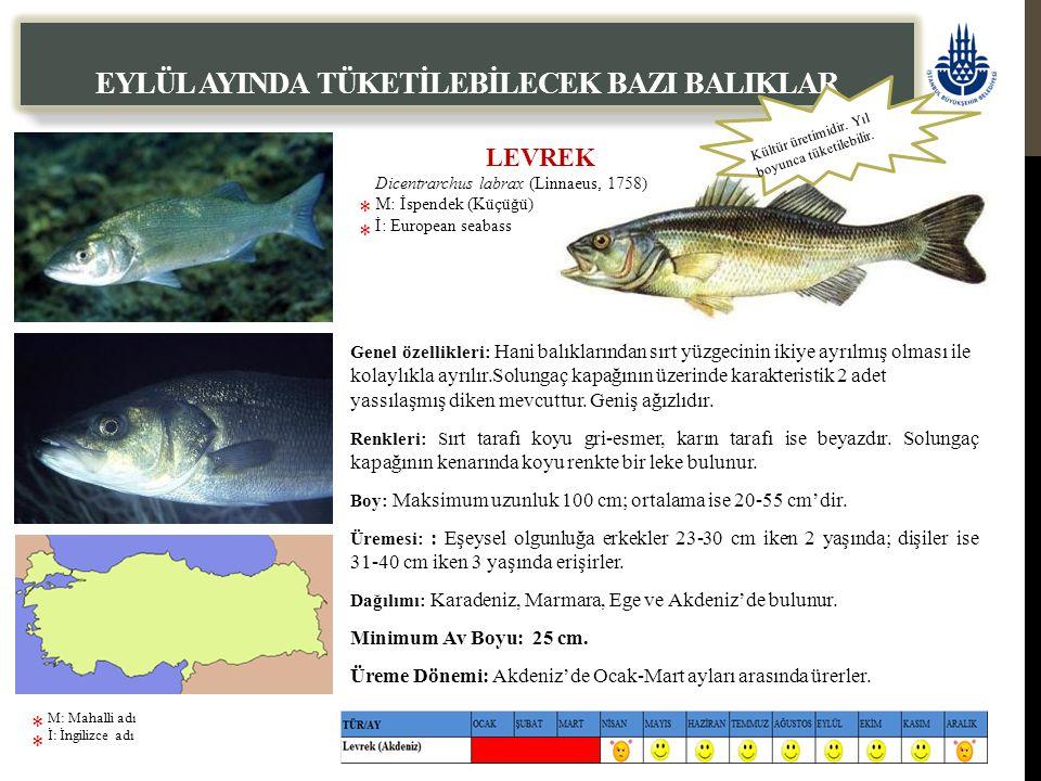 EYLÜL AYINDA TÜKETİLEBİLECEK BAZI BALIKLAR Genel özellikleri: Hani balıklarından sırt yüzgecinin ikiye ayrılmış olması ile kolaylıkla ayrılır.Solungaç