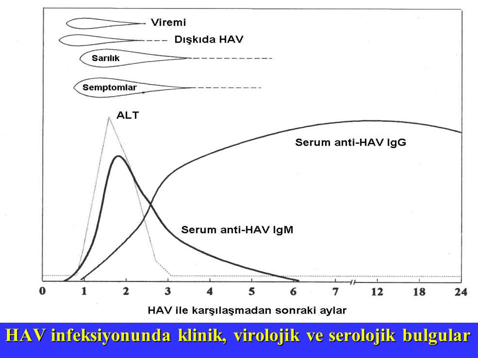 HAV infeksiyonunda klinik, virolojik ve serolojik bulgular