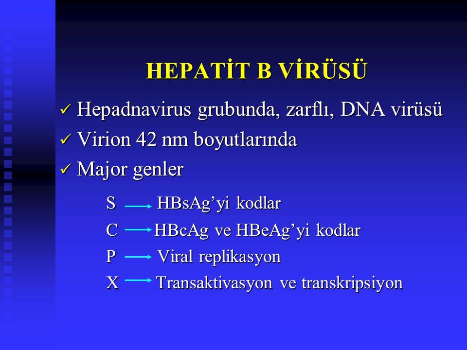 HEPATİT B VİRÜSÜ Hepadnavirus grubunda, zarflı, DNA virüsü Hepadnavirus grubunda, zarflı, DNA virüsü Virion 42 nm boyutlarında Virion 42 nm boyutlarında Major genler Major genler S HBsAg'yi kodlar C HBcAg ve HBeAg'yi kodlar P Viral replikasyon X Transaktivasyon ve transkripsiyon