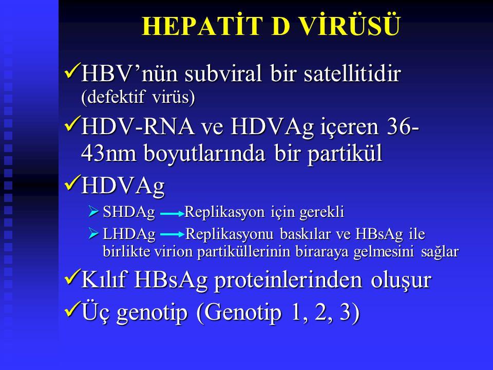 HEPATİT D VİRÜSÜ HBV'nün subviral bir satellitidir (defektif virüs) HBV'nün subviral bir satellitidir (defektif virüs) HDV-RNA ve HDVAg içeren 36- 43nm boyutlarında bir partikül HDV-RNA ve HDVAg içeren 36- 43nm boyutlarında bir partikül HDVAg HDVAg  SHDAg Replikasyon için gerekli  LHDAg Replikasyonu baskılar ve HBsAg ile birlikte virion partiküllerinin biraraya gelmesini sağlar Kılıf HBsAg proteinlerinden oluşur Kılıf HBsAg proteinlerinden oluşur Üç genotip (Genotip 1, 2, 3) Üç genotip (Genotip 1, 2, 3)