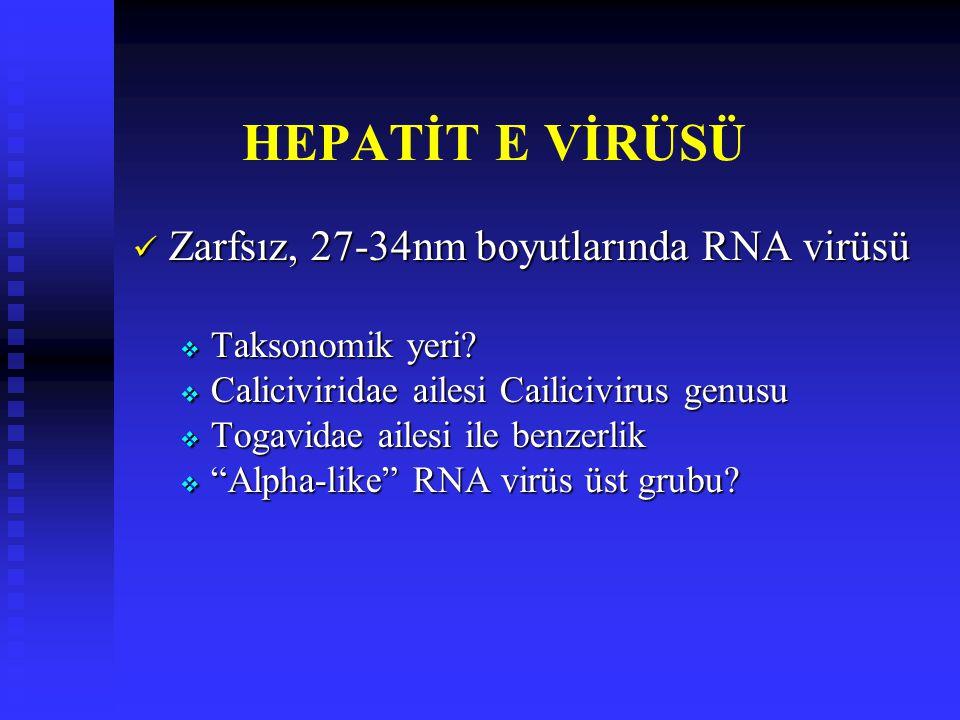 HEPATİT E VİRÜSÜ Zarfsız, 27-34nm boyutlarında RNA virüsü Zarfsız, 27-34nm boyutlarında RNA virüsü  Taksonomik yeri?  Caliciviridae ailesi Cailicivi