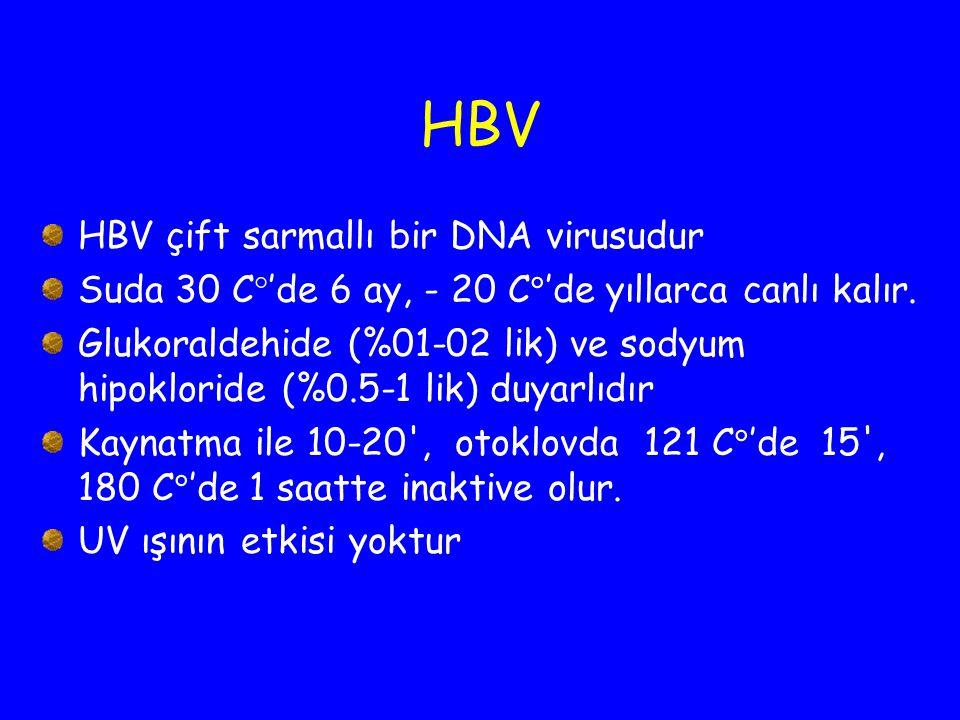 HBV HBV çift sarmallı bir DNA virusudur Suda 30 C  'de 6 ay, - 20 C  'de yıllarca canlı kalır. Glukoraldehide (%01-02 lik) ve sodyum hipokloride (%0