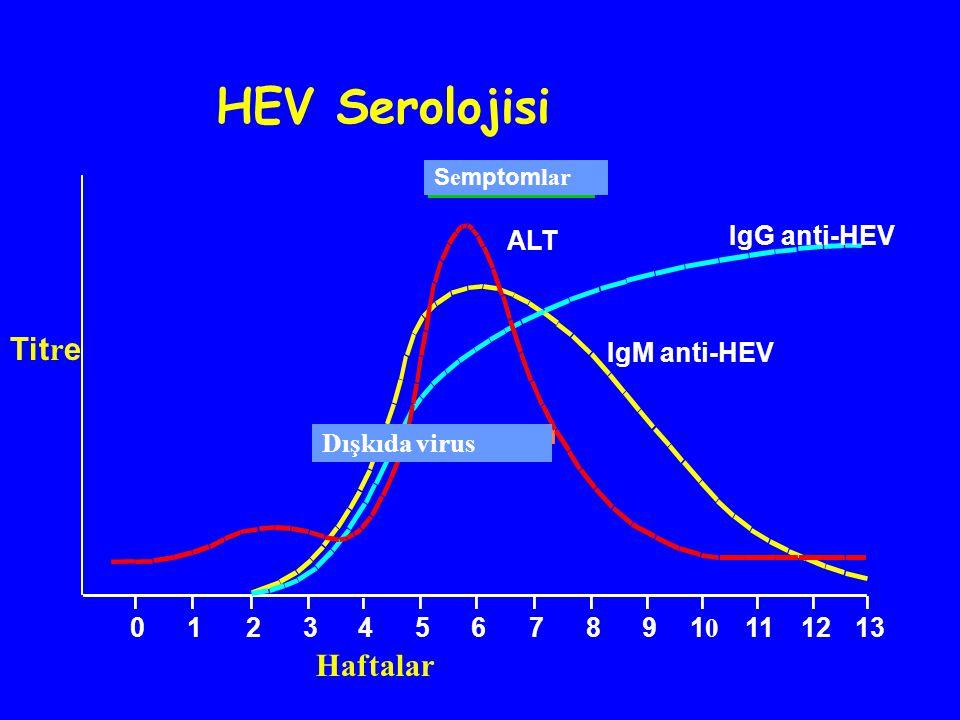 S e mptom lar ALT IgG anti-HEV IgM anti-HEV Dışkıda virus 01234567891010 111213 HEV Serolojisi Tit r e Haftalar
