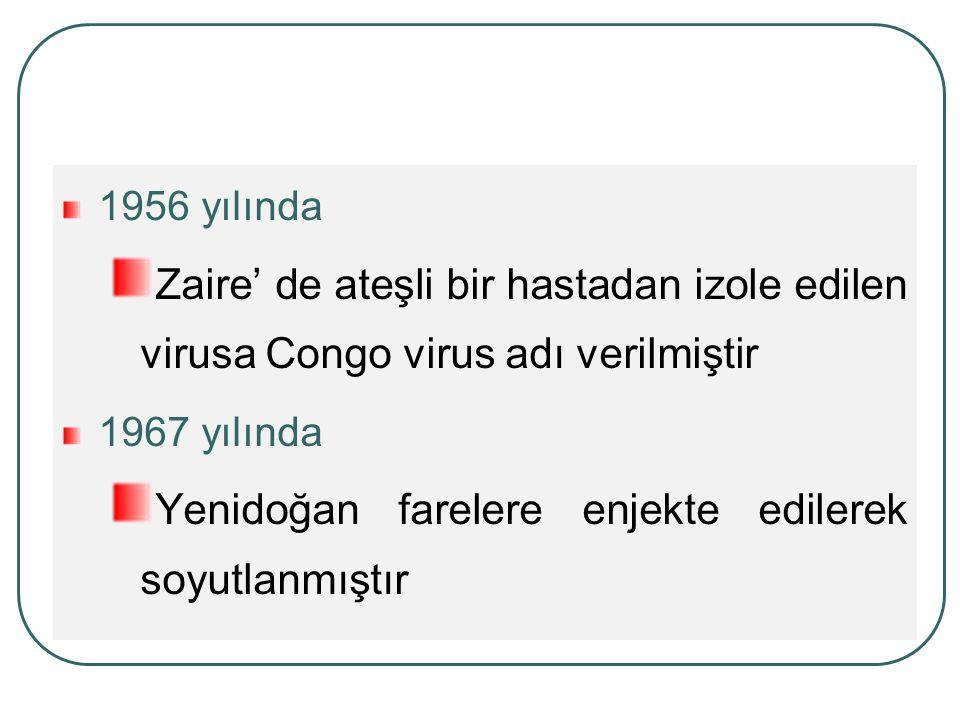 1956 yılında Zaire' de ateşli bir hastadan izole edilen virusa Congo virus adı verilmiştir 1967 yılında Yenidoğan farelere enjekte edilerek soyutlanmıştır