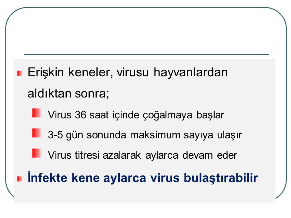 Erişkin keneler, virusu hayvanlardan aldıktan sonra; Virus 36 saat içinde çoğalmaya başlar 3-5 gün sonunda maksimum sayıya ulaşır Virus titresi azalarak aylarca devam eder İnfekte kene aylarca virus bulaştırabilir