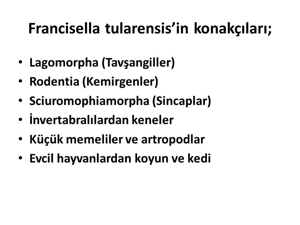 Francisella tularensis'in konakçıları; Lagomorpha (Tavşangiller) Rodentia (Kemirgenler) Sciuromophiamorpha (Sincaplar) İnvertabralılardan keneler Küçü
