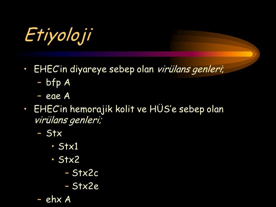 Etiyoloji EHEC'in diyareye sebep olan virülans genleri; –bfp A –eae A EHEC'in hemorajik kolit ve HÜS'e sebep olan virülans genleri; –Stx Stx1 Stx2 –St