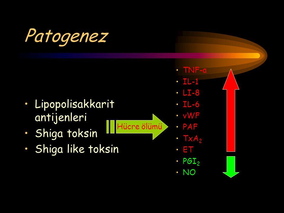 Patogenez Lipopolisakkarit antijenleri Shiga toksin Shiga like toksin TNF-a IL-1 LI-8 IL-6 vWF PAF TxA 2 ET PGI 2 NO Hücre ölümü