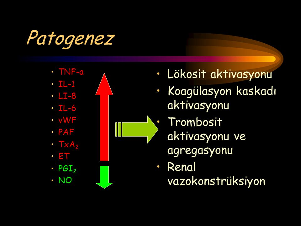 Patogenez Lökosit aktivasyonu Koagülasyon kaskadı aktivasyonu Trombosit aktivasyonu ve agregasyonu Renal vazokonstrüksiyon TNF-a IL-1 LI-8 IL-6 vWF PA