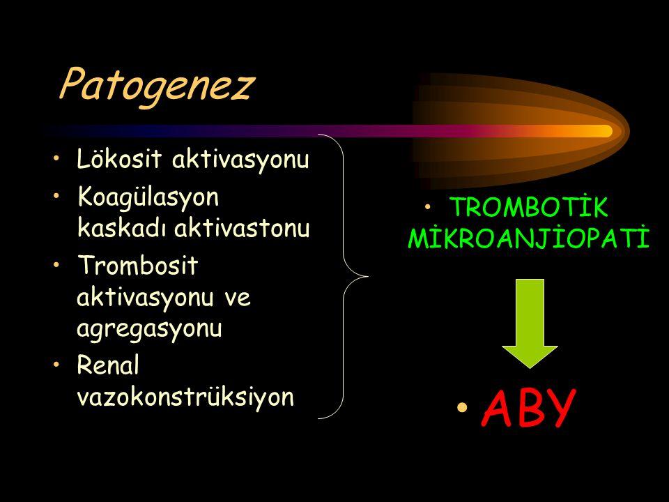 Patogenez Lökosit aktivasyonu Koagülasyon kaskadı aktivastonu Trombosit aktivasyonu ve agregasyonu Renal vazokonstrüksiyon TROMBOTİK MİKROANJİOPATİ AB