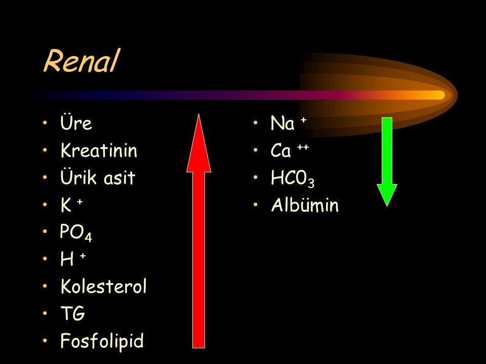 Renal Üre Kreatinin Ürik asit K + PO 4 H + Kolesterol TG Fosfolipid Na + Ca ++ HC0 3 Albümin