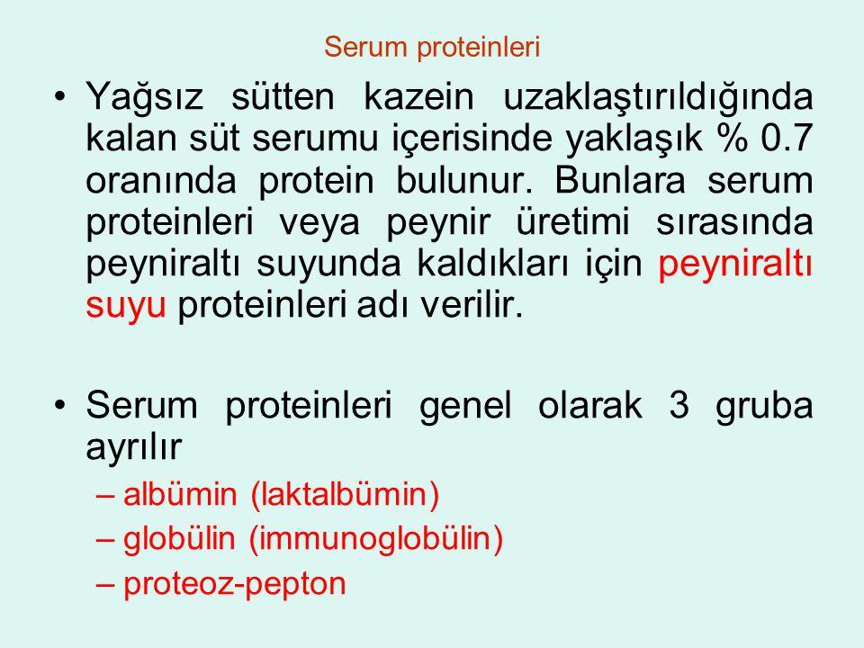 Serum proteinleri Yağsız sütten kazein uzaklaştırıldığında kalan süt serumu içerisinde yaklaşık % 0.7 oranında protein bulunur.