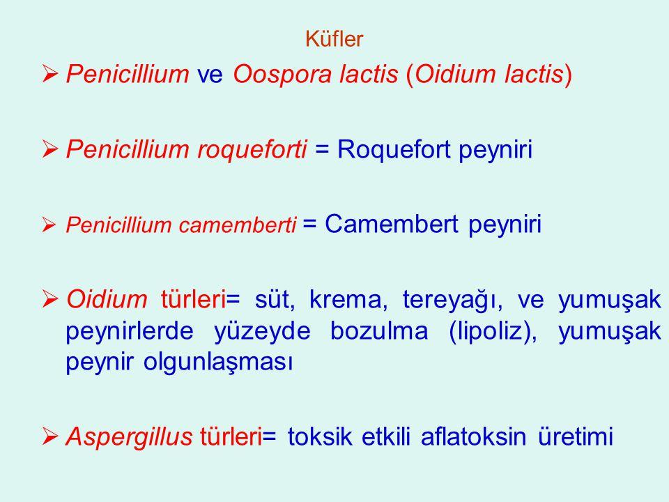Küfler  Penicillium ve Oospora lactis (Oidium lactis)  Penicillium roqueforti = Roquefort peyniri  Penicillium camemberti = Camembert peyniri  Oidium türleri= süt, krema, tereyağı, ve yumuşak peynirlerde yüzeyde bozulma (lipoliz), yumuşak peynir olgunlaşması  Aspergillus türleri= toksik etkili aflatoksin üretimi