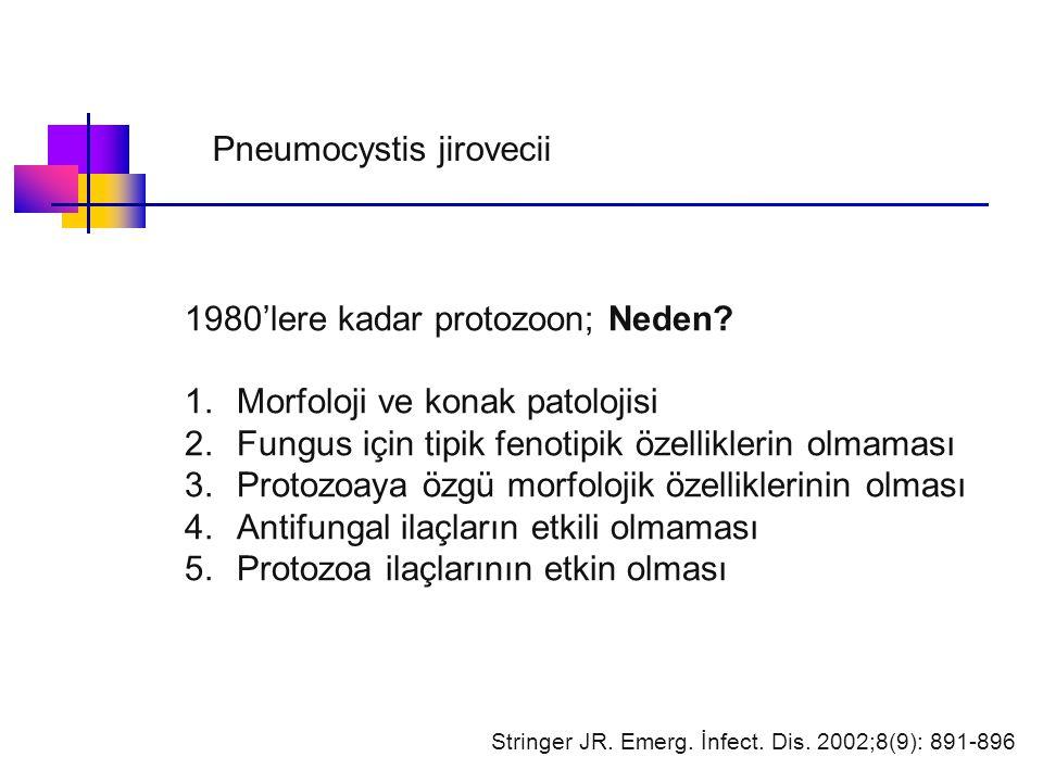 1980'lere kadar protozoon; Neden? 1.Morfoloji ve konak patolojisi 2.Fungus için tipik fenotipik özelliklerin olmaması 3.Protozoaya özgü morfolojik öze