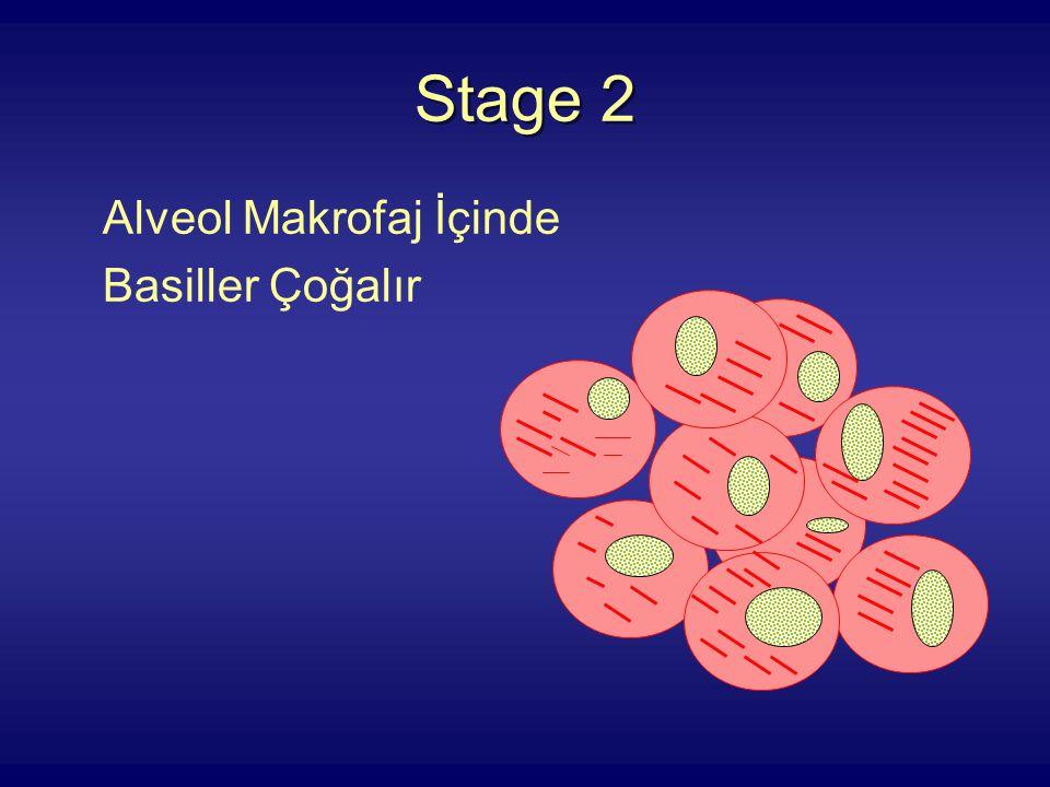 Stage 2 Alveol Makrofaj İçinde Basiller Çoğalır