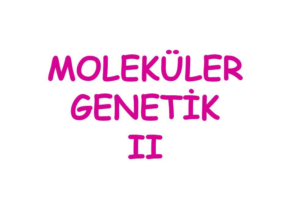 MOLEKÜLER GENETİK II