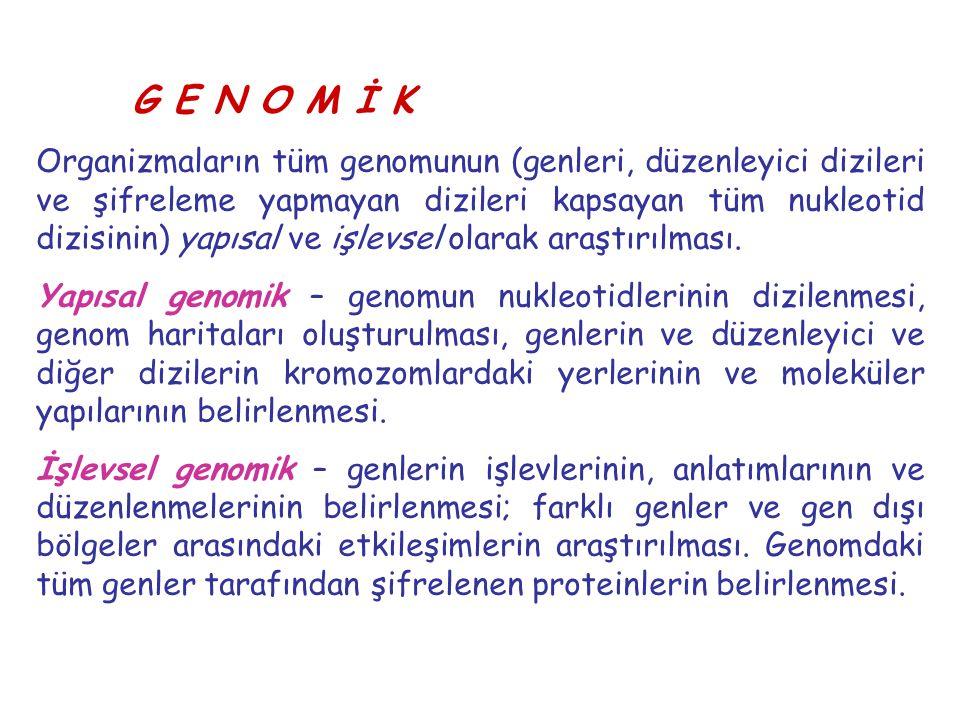 G E N O M İ K Organizmaların tüm genomunun (genleri, düzenleyici dizileri ve şifreleme yapmayan dizileri kapsayan tüm nukleotid dizisinin) yapısal ve