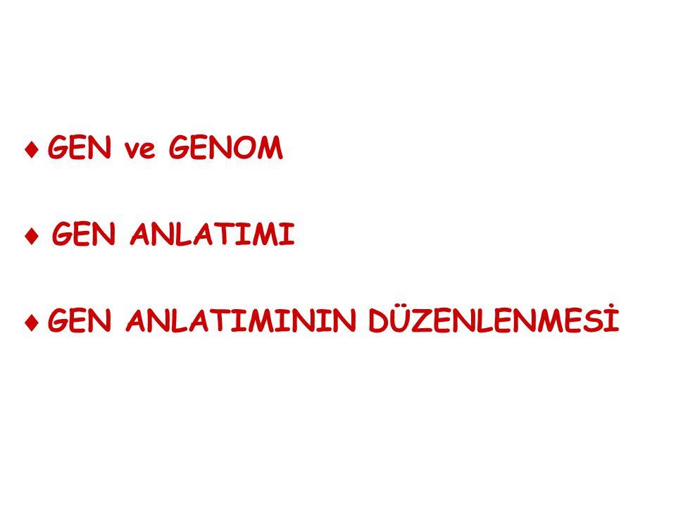 Bir bireyin tüm karakterlerine (fenotip) ait bilgi kalıtsal molekülündeki birimlerde (genler) şifreli biçimde yazılıdır.