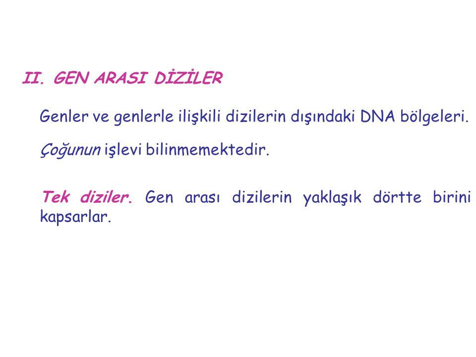 II. GEN ARASI DİZİLER Genler ve genlerle ilişkili dizilerin dışındaki DNA bölgeleri. Çoğunun işlevi bilinmemektedir. Tek diziler. Gen arası dizilerin